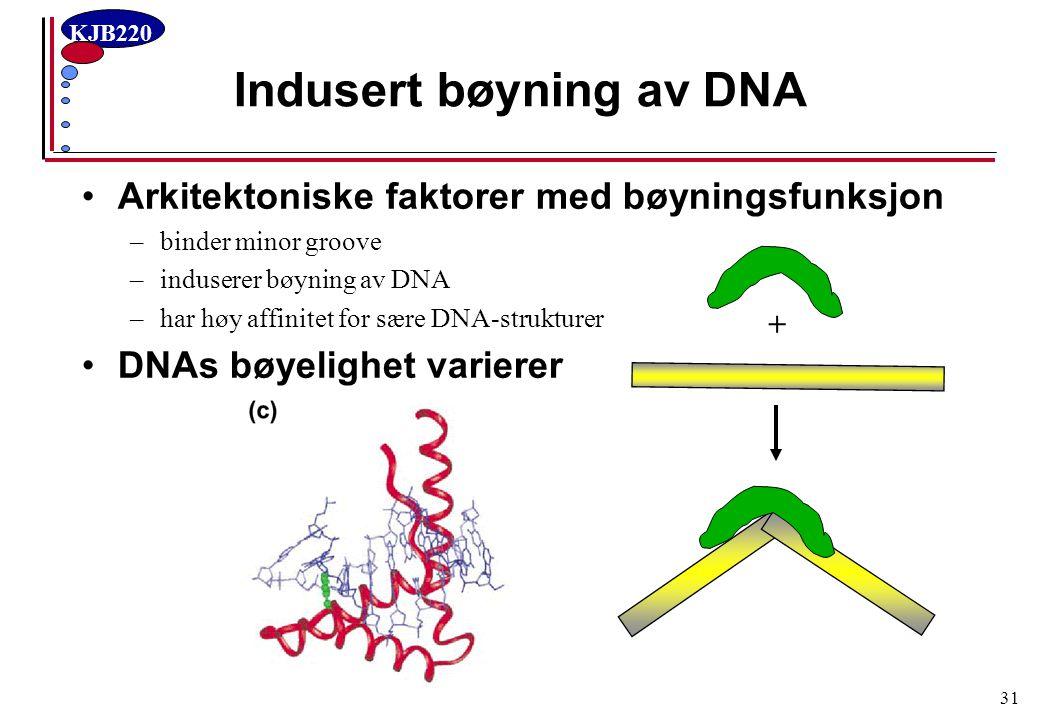 KJB220 31 Indusert bøyning av DNA Arkitektoniske faktorer med bøyningsfunksjon –binder minor groove –induserer bøyning av DNA –har høy affinitet for s