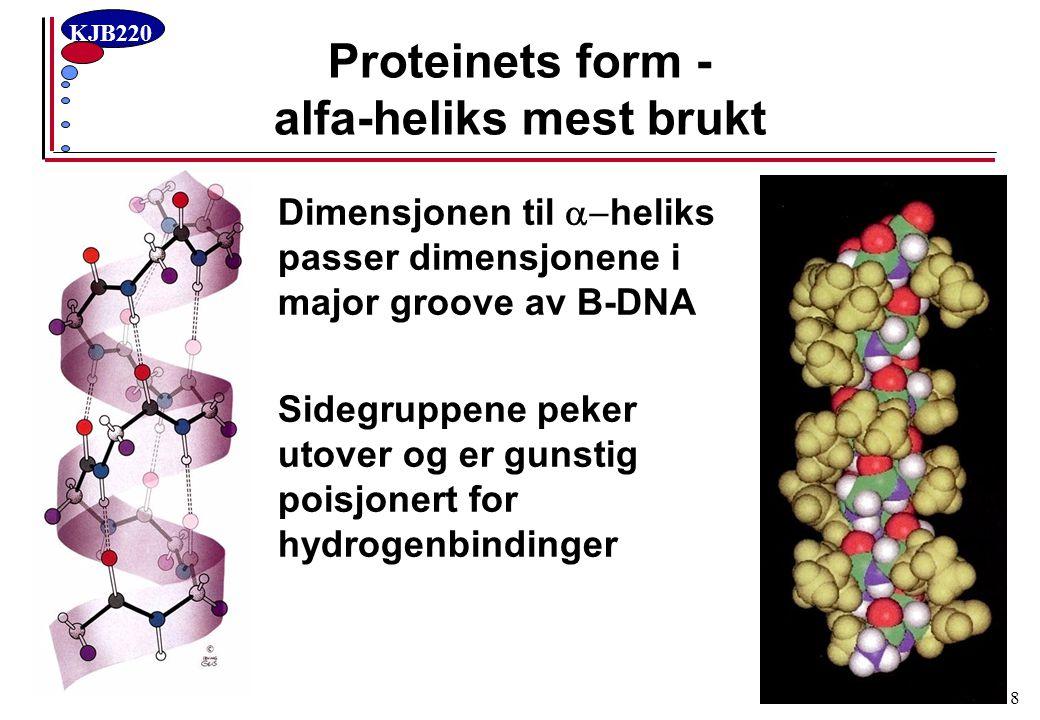KJB220 9 DNAs form: B-DNA mest brukt DNA B-formA-form Major grooveMinor grooveMajor grooveMinor groove Vid geometri passer  -heliks Hvert basepar med unikt H-bindings- mønster Dyp og trang geometri Hvert basepar binært H-bindings- mønster Dyp og trang geometri Grunn og vid