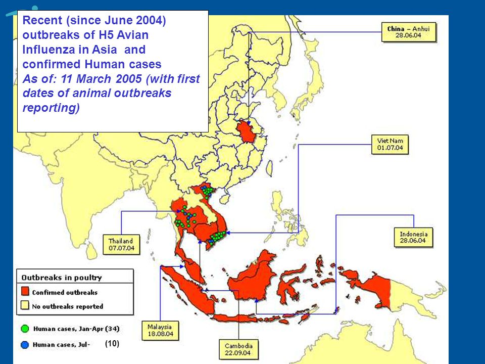 Olav Hungnes - Folkehelseinstituttet Recent (since June 2004) outbreaks of H5 Avian Influenza in Asia and confirmed Human cases As of: 11 March 2005 (