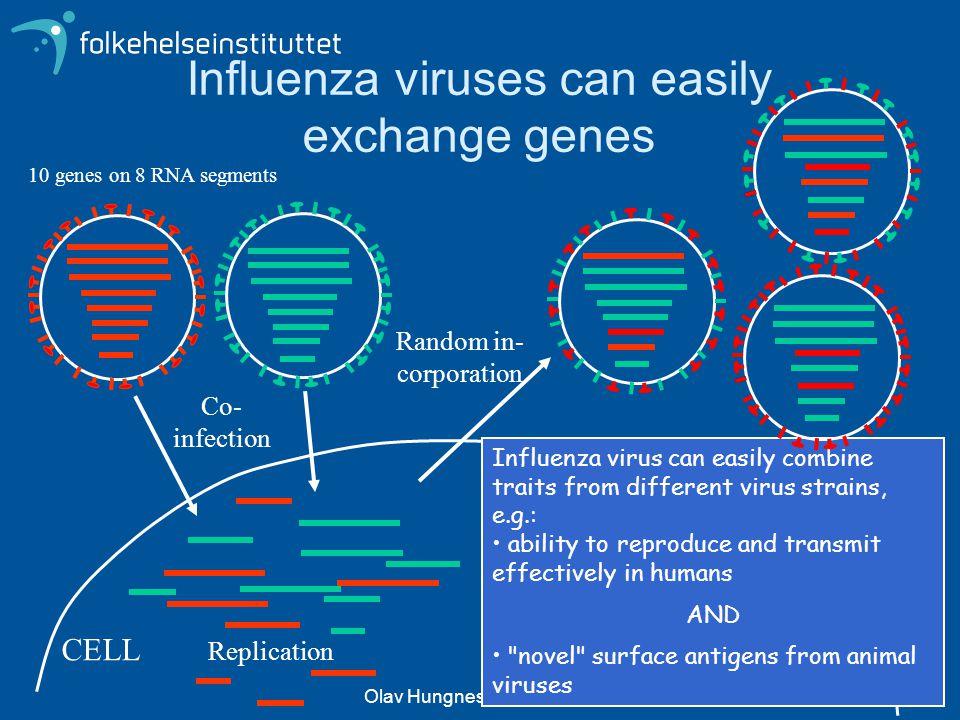 Olav Hungnes - Folkehelseinstituttet Influenza viruses can easily exchange genes 10 genes on 8 RNA segments Influenza virus can easily combine traits
