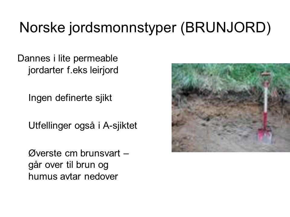 Norske jordsmonnstyper (BRUNJORD) Dannes i lite permeable jordarter f.eks leirjord Ingen definerte sjikt Utfellinger også i A-sjiktet Øverste cm bruns