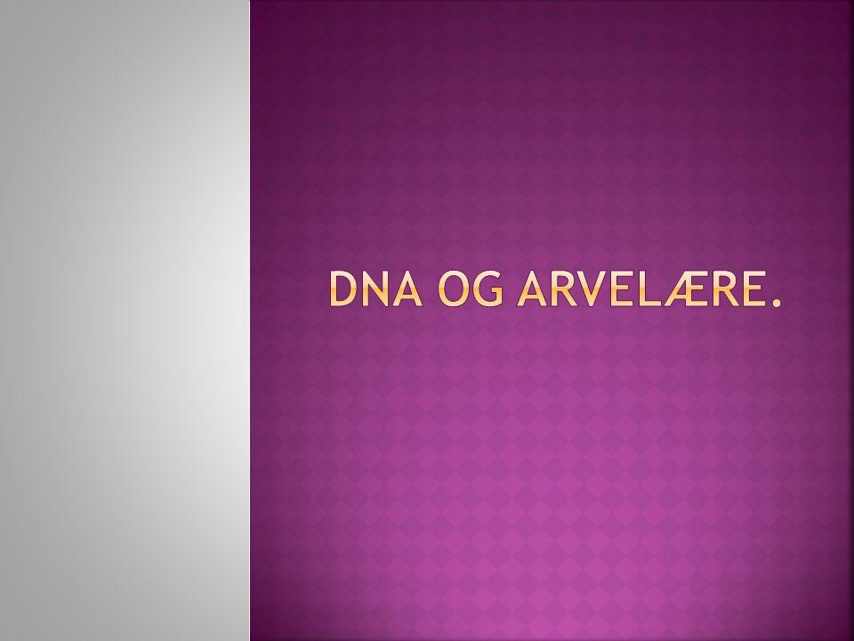  Du skal vite hva arv er.  Kunne forklare sammenhengen mellom gener, kromosomer og DNA.