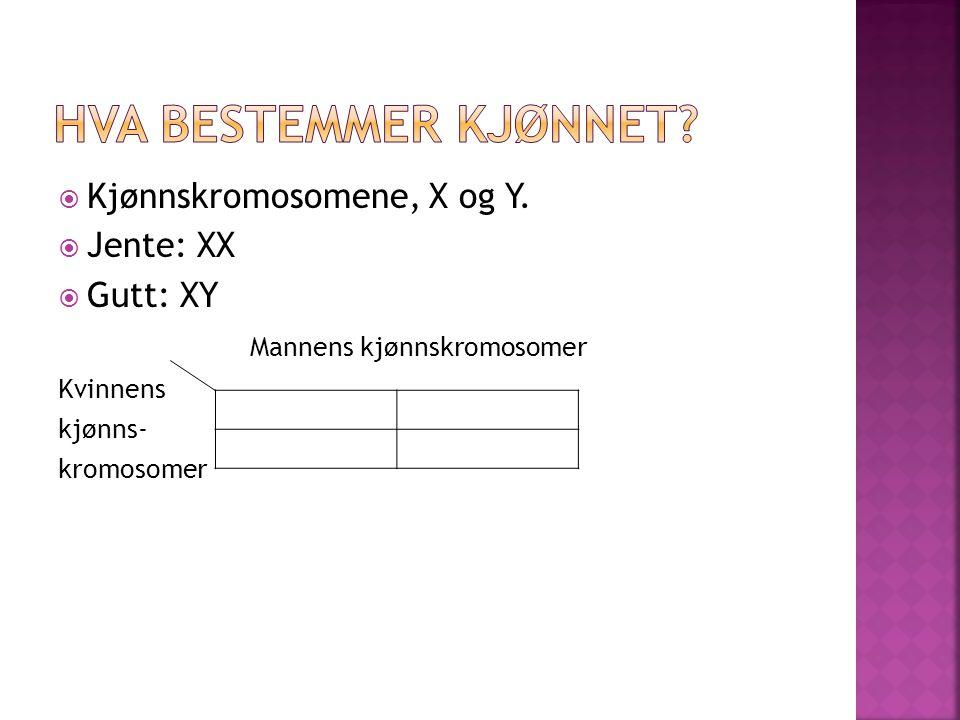  Kjønnskromosomene, X og Y.