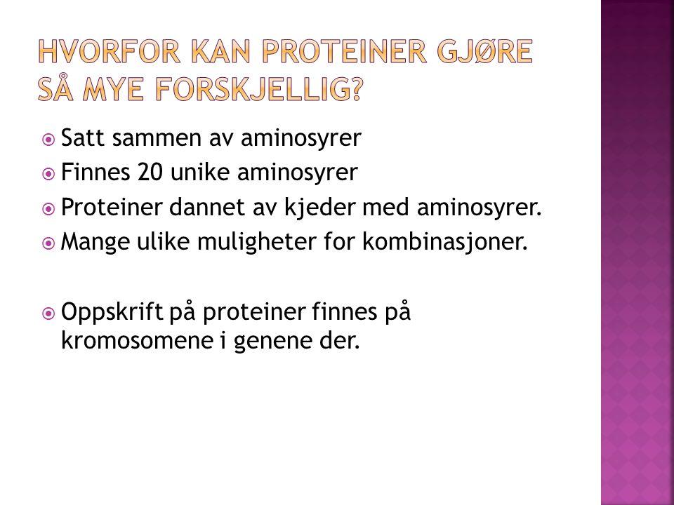  Satt sammen av aminosyrer  Finnes 20 unike aminosyrer  Proteiner dannet av kjeder med aminosyrer.
