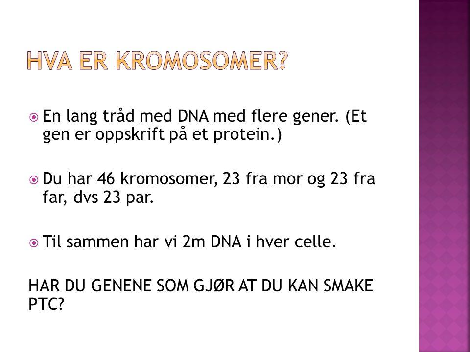  En lang tråd med DNA med flere gener.