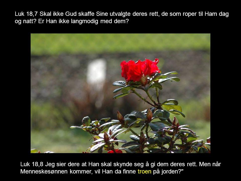 Luk 18,7 Skal ikke Gud skaffe Sine utvalgte deres rett, de som roper til Ham dag og natt? Er Han ikke langmodig med dem? Luk 18,8 Jeg sier dere at Han