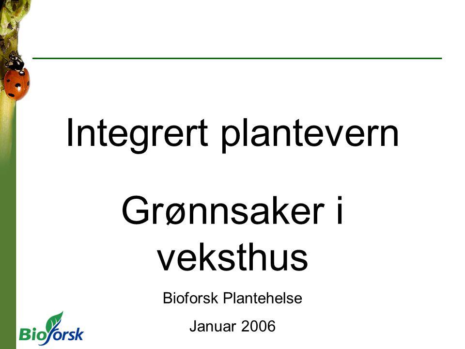 Integrert plantevern Grønnsaker i veksthus Bioforsk Plantehelse Januar 2006
