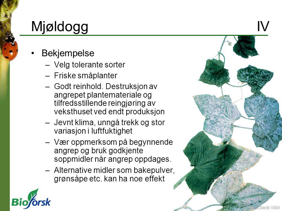 Mjøldogg IV Bekjempelse –Velg tolerante sorter –Friske småplanter –Godt reinhold. Destruksjon av angrepet plantemateriale og tilfredsstillende reingjø