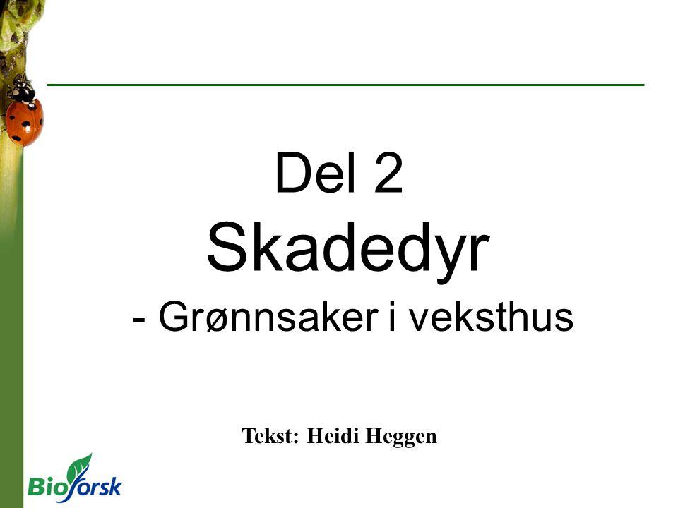 Del 2 Skadedyr - Grønnsaker i veksthus Tekst: Heidi Heggen