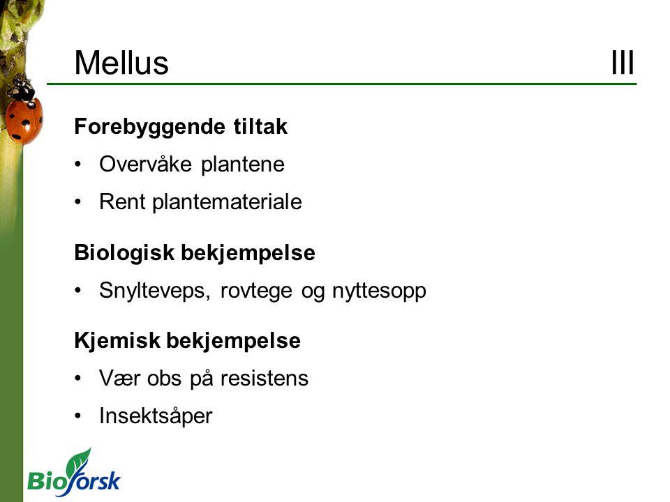 Mellus III Forebyggende tiltak Overvåke plantene Rent plantemateriale Biologisk bekjempelse Snylteveps, rovtege og nyttesopp Kjemisk bekjempelse Vær o