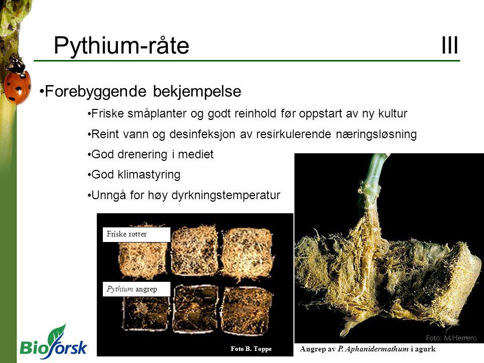 Bladlus II Biologi Lever av plantesaft Stor formeringsevne Formering uten hanner Formering hele året i veksthus Vingedannelse ved høy tetthet Ferskenbladlus, grønn Ferskenbladlus, rød