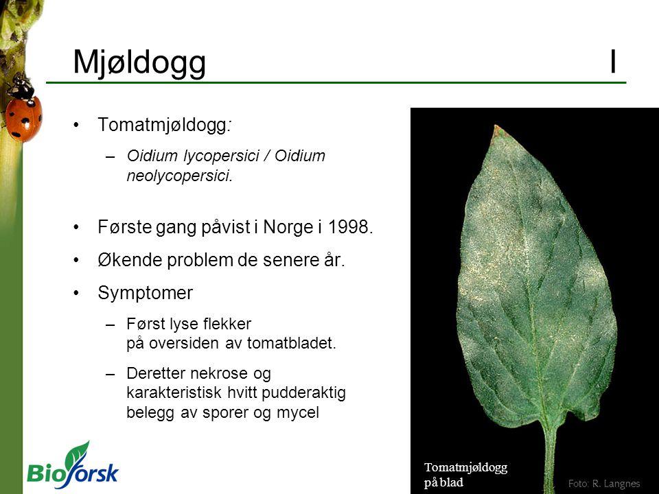 Mjøldogg I Tomatmjøldogg: –Oidium lycopersici / Oidium neolycopersici. Første gang påvist i Norge i 1998. Økende problem de senere år. Symptomer –Førs
