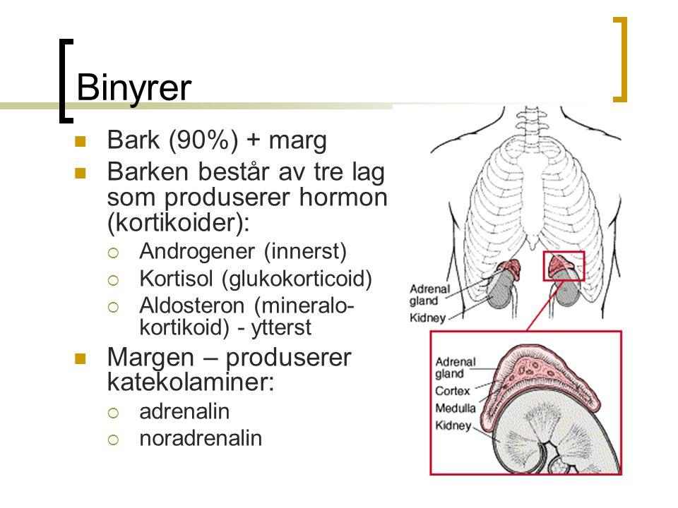 Binyrer Bark (90%) + marg Barken består av tre lag som produserer hormon (kortikoider):  Androgener (innerst)  Kortisol (glukokorticoid)  Aldostero