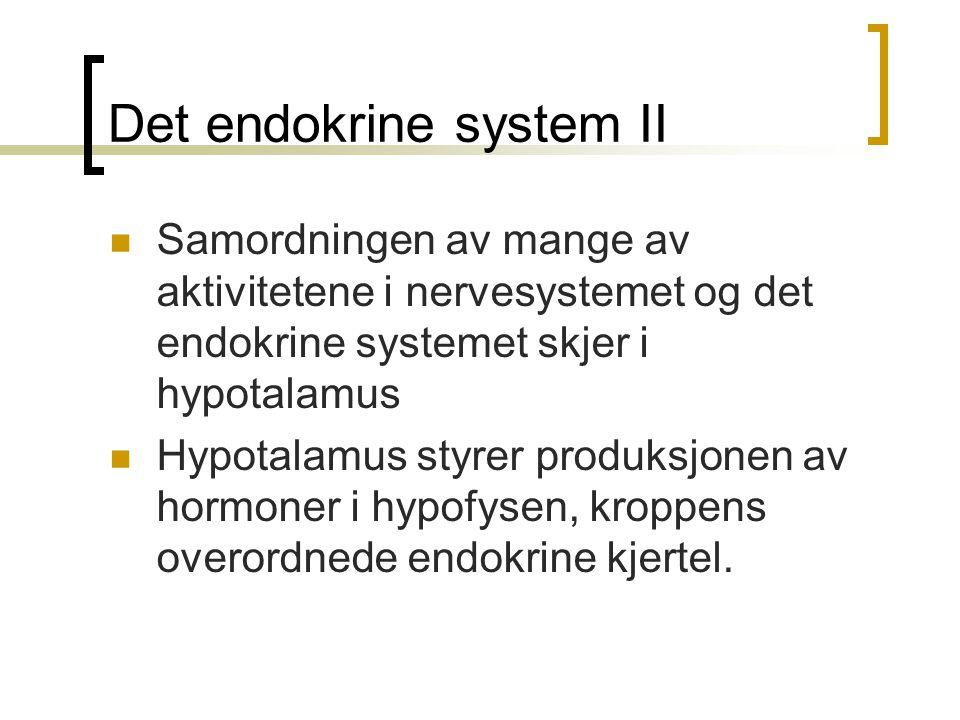 Det endokrine system II Samordningen av mange av aktivitetene i nervesystemet og det endokrine systemet skjer i hypotalamus Hypotalamus styrer produks