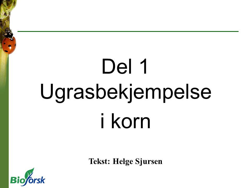 Del 1 Ugrasbekjempelse i korn Tekst: Helge Sjursen