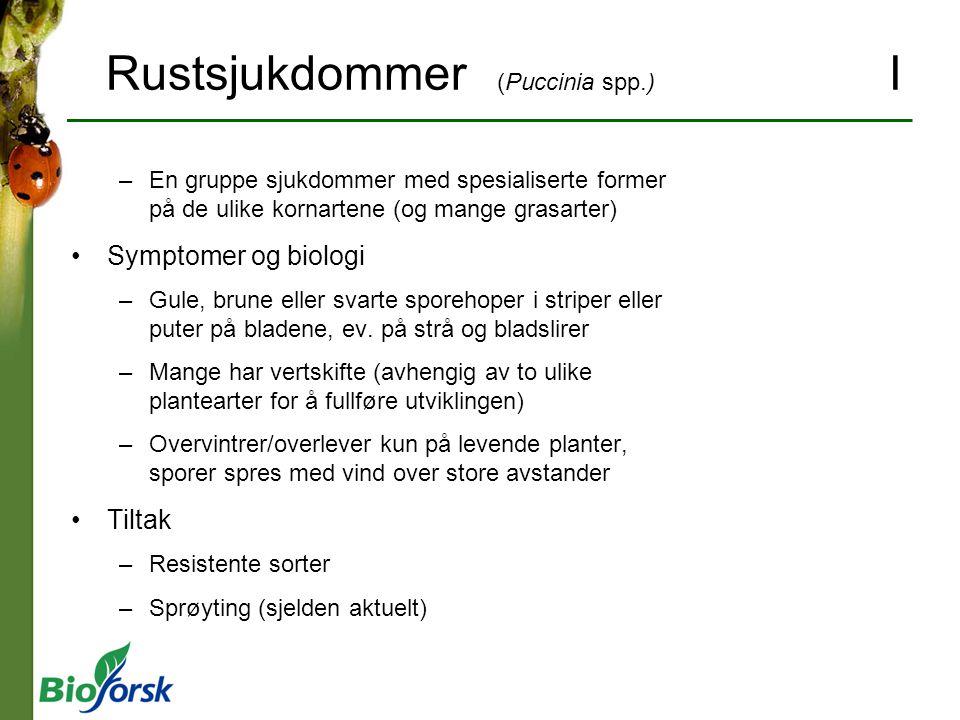Rustsjukdommer (Puccinia spp.) I –En gruppe sjukdommer med spesialiserte former på de ulike kornartene (og mange grasarter) Symptomer og biologi –Gule