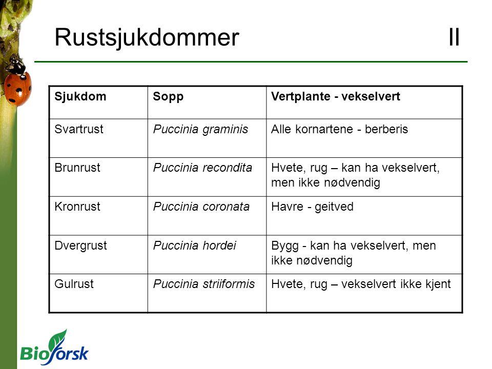 Rustsjukdommer II SjukdomSoppVertplante - vekselvert SvartrustPuccinia graminisAlle kornartene - berberis BrunrustPuccinia reconditaHvete, rug – kan h