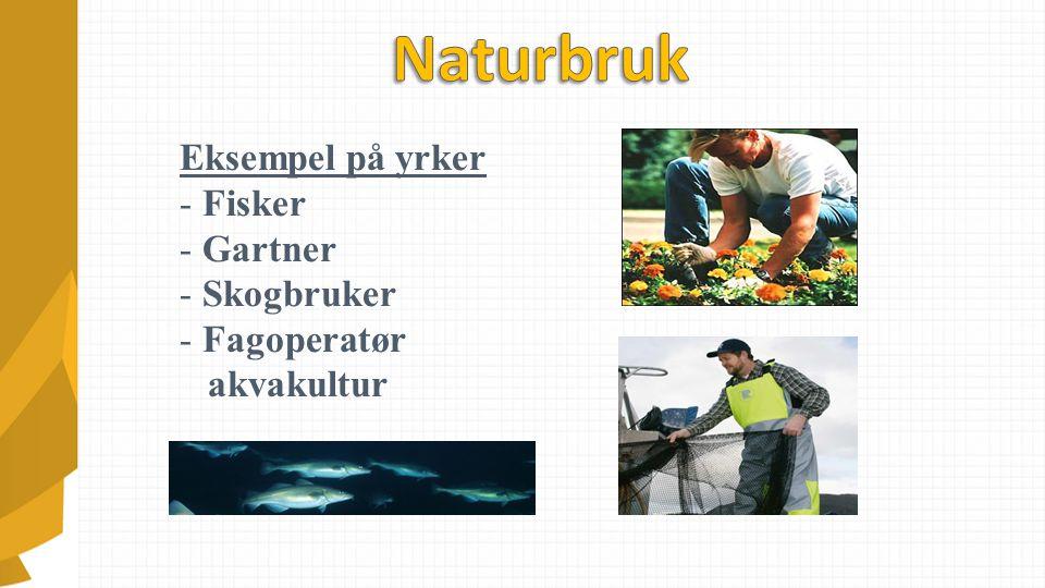 Eksempel på yrker - Fisker - Gartner - Skogbruker - Fagoperatør akvakultur