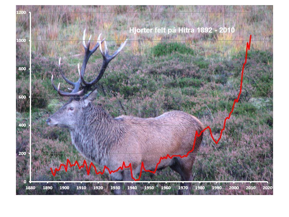 2000 -02 -04 -06 -08 -10 År 25 30 35 40 45 50 Slaktevekt (kg) Hjort 1 år, Hitra Hann Hunn