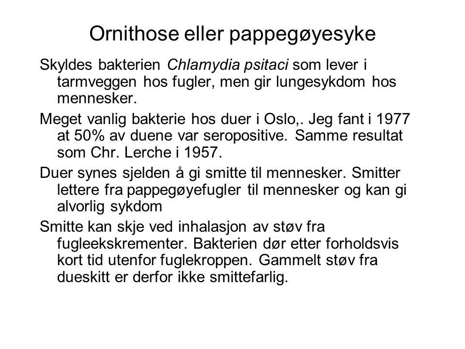 Ornithose eller pappegøyesyke Skyldes bakterien Chlamydia psitaci som lever i tarmveggen hos fugler, men gir lungesykdom hos mennesker. Meget vanlig b