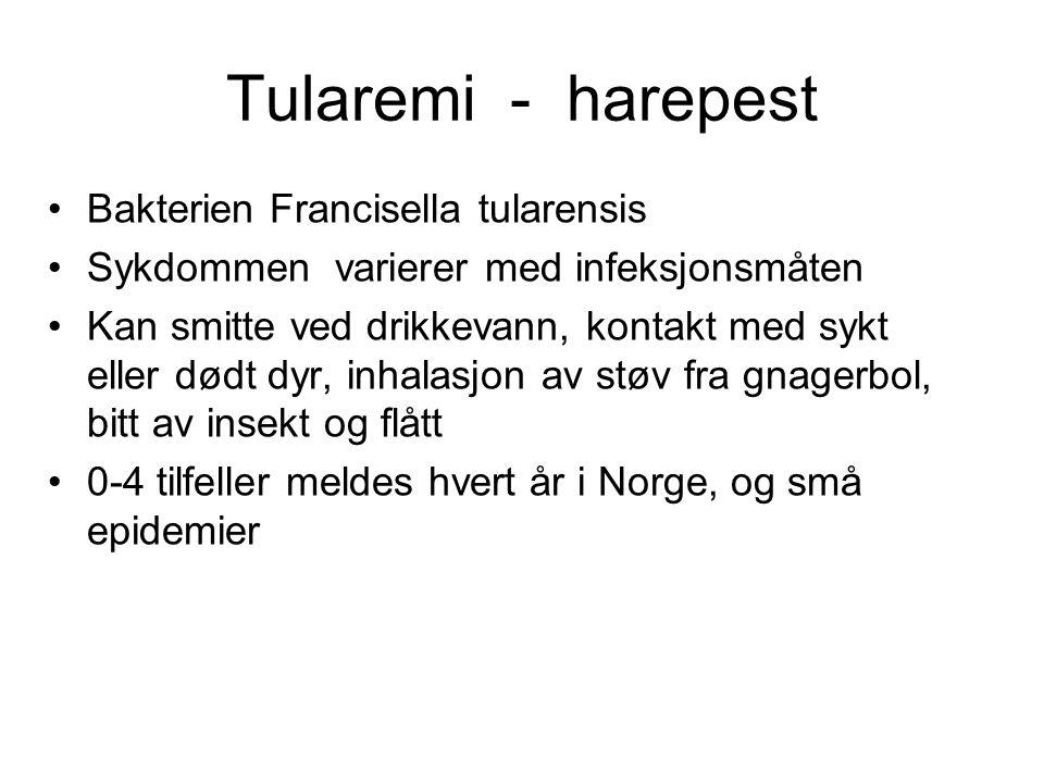 Tularemi - harepest Bakterien Francisella tularensis Sykdommen varierer med infeksjonsmåten Kan smitte ved drikkevann, kontakt med sykt eller dødt dyr