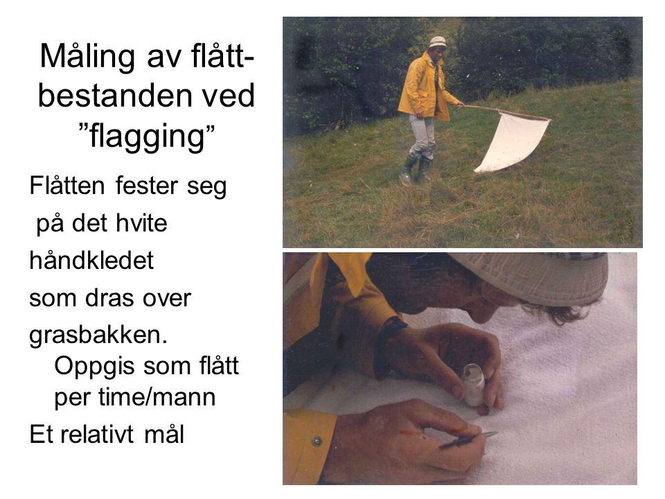 """Måling av flått- bestanden ved """"flagging """" Flåtten fester seg på det hvite håndkledet som dras over grasbakken. Oppgis som flått per time/mann Et rela"""