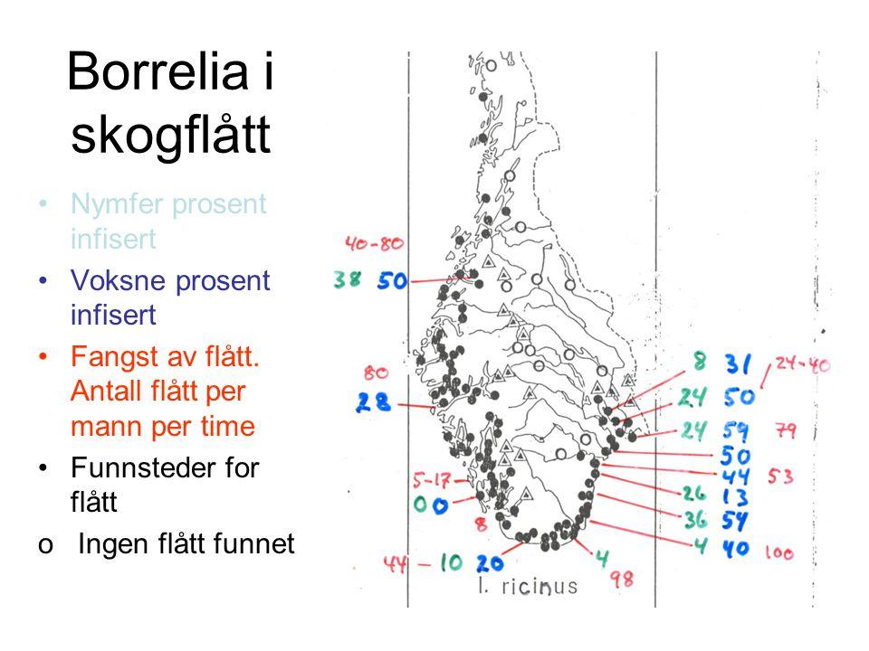 Borrelia i skogflått Nymfer prosent infisert Voksne prosent infisert Fangst av flått. Antall flått per mann per time Funnsteder for flått o Ingen flåt