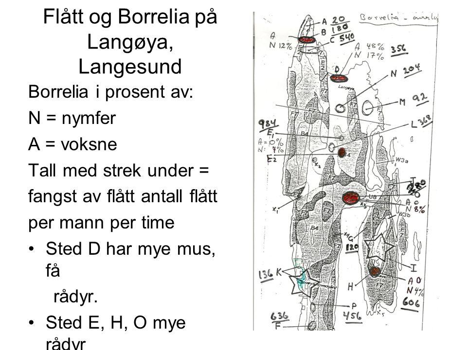 Flått og Borrelia på Langøya, Langesund Borrelia i prosent av: N = nymfer A = voksne Tall med strek under = fangst av flått antall flått per mann per