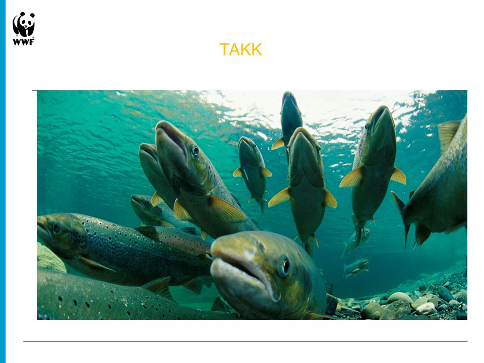 TAKK © Paul Nicklen / National Geographic stock / WWF