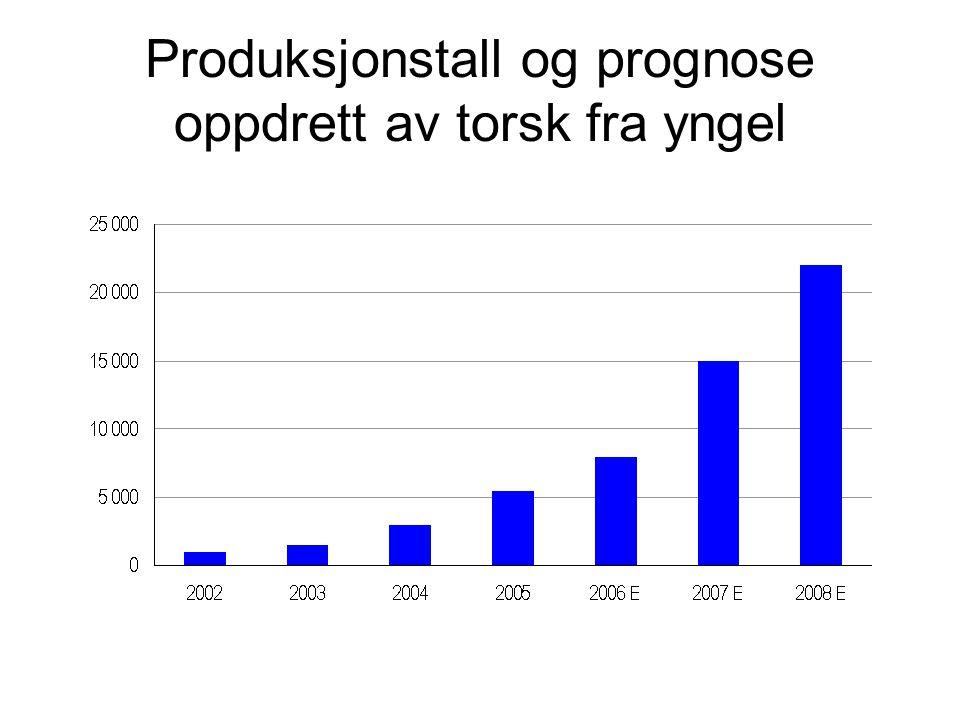 Produksjonstall og prognose oppdrett av torsk fra yngel