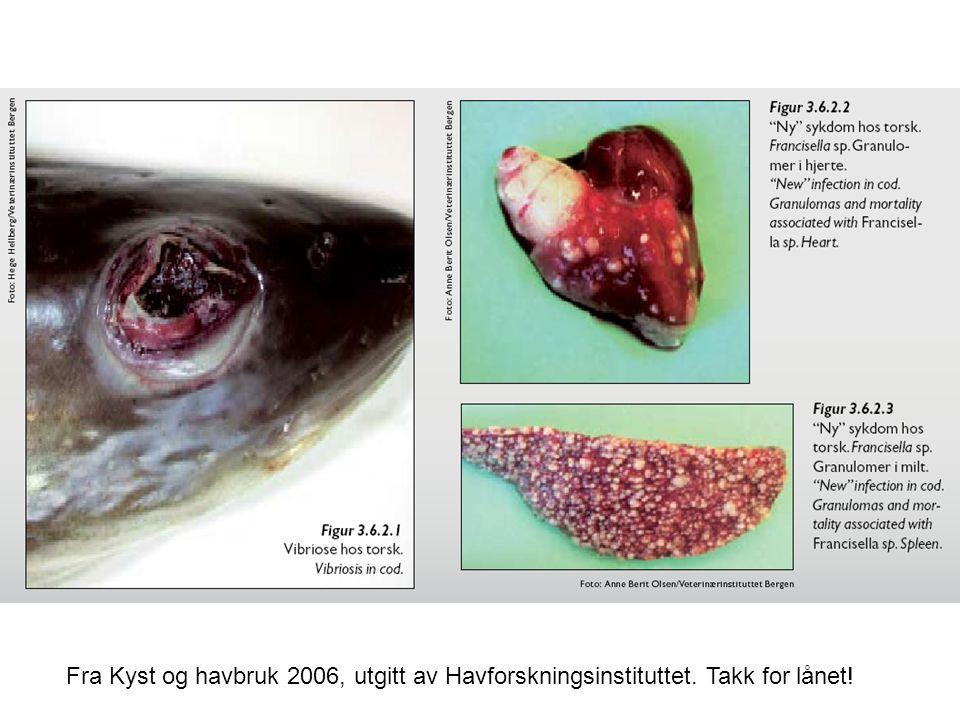 Fra Kyst og havbruk 2006, utgitt av Havforskningsinstituttet. Takk for lånet!