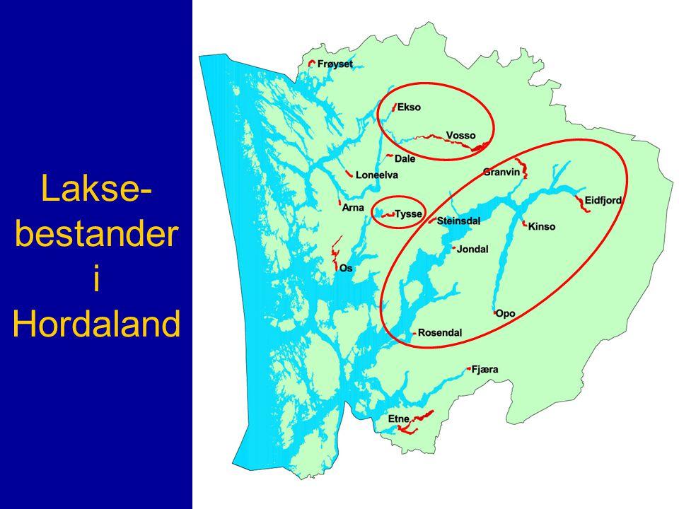 Lakse- bestander i Hordaland