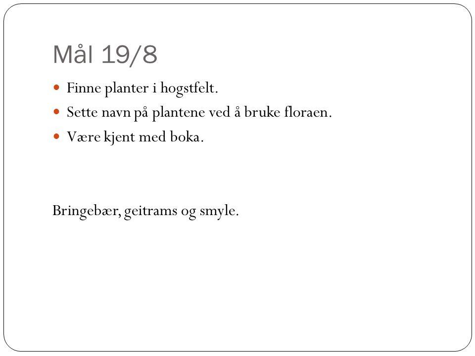 Mål 19/8 Finne planter i hogstfelt. Sette navn på plantene ved å bruke floraen. Være kjent med boka. Bringebær, geitrams og smyle.