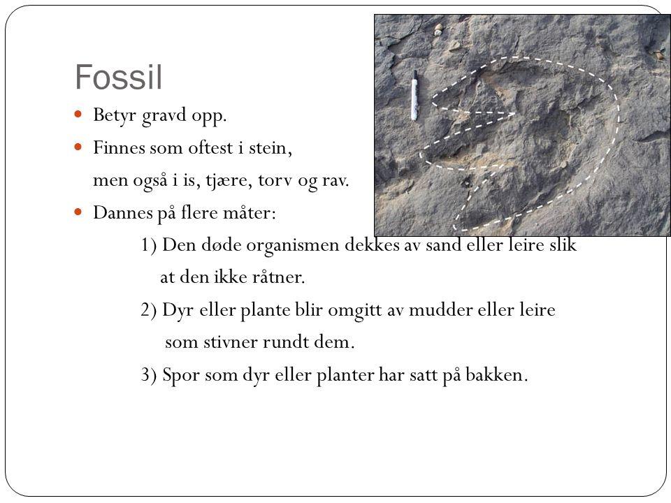 Fossil Betyr gravd opp. Finnes som oftest i stein, men også i is, tjære, torv og rav. Dannes på flere måter: 1) Den døde organismen dekkes av sand ell