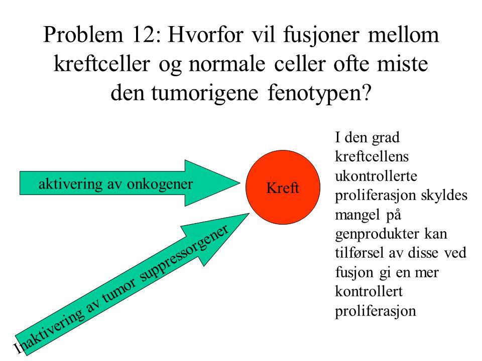 Problem 12: Hvorfor vil fusjoner mellom kreftceller og normale celler ofte miste den tumorigene fenotypen? Kreft aktivering av onkogener Inaktivering