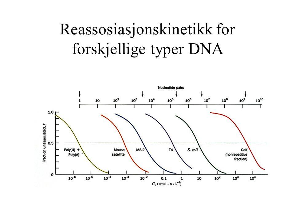 Reassosiasjonskinetikk for forskjellige typer DNA