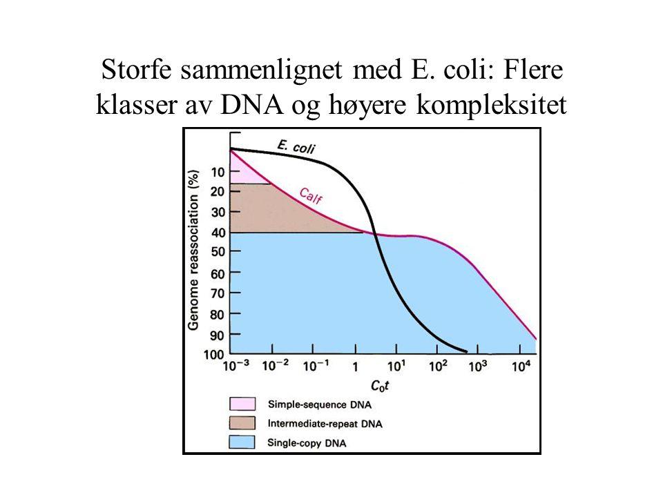 Storfe sammenlignet med E. coli: Flere klasser av DNA og høyere kompleksitet