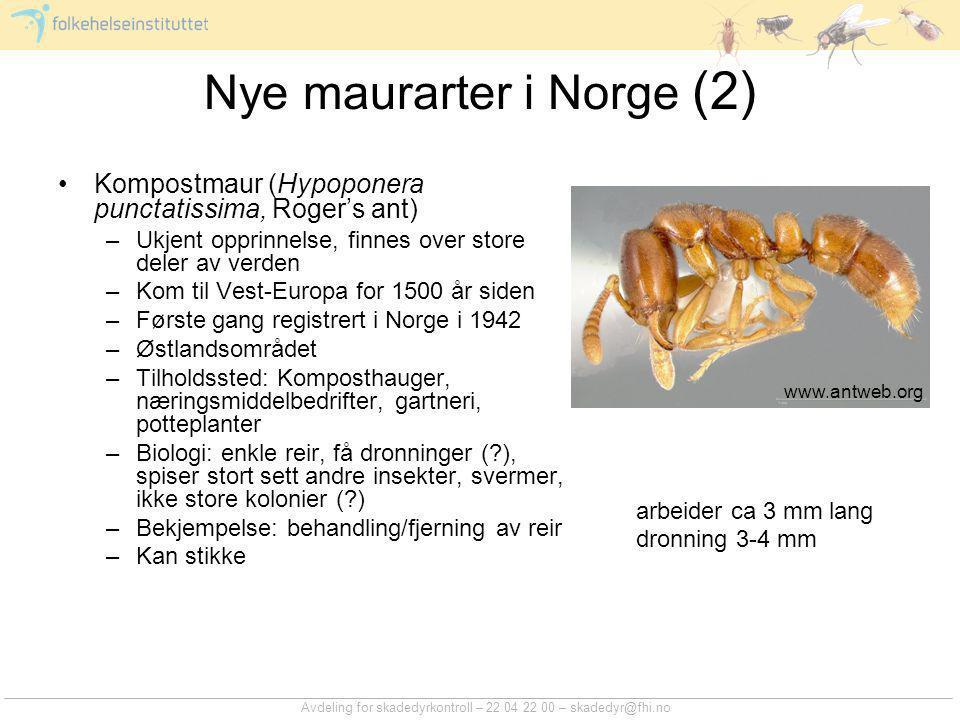 Avdeling for skadedyrkontroll – 22 04 22 00 – skadedyr@fhi.no Nye maurarter i Norge (2) Kompostmaur (Hypoponera punctatissima, Roger's ant) –Ukjent op