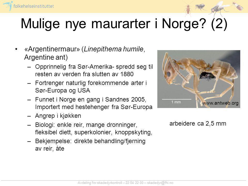 Avdeling for skadedyrkontroll – 22 04 22 00 – skadedyr@fhi.no Mulige nye maurarter i Norge? (2) «Argentinermaur» (Linepithema humile, Argentine ant) –
