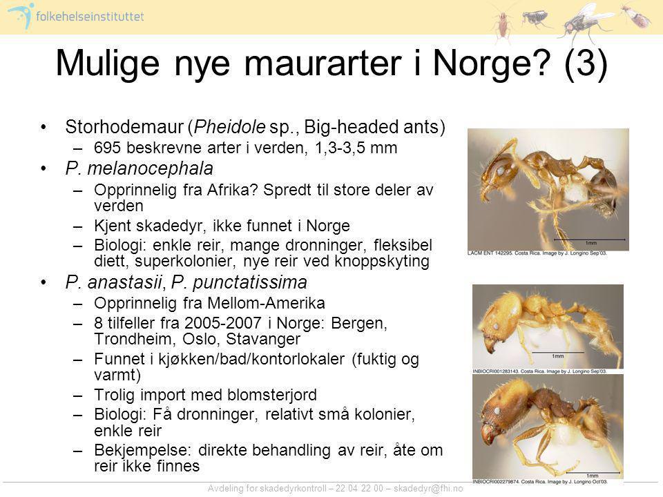 Avdeling for skadedyrkontroll – 22 04 22 00 – skadedyr@fhi.no Mulige nye maurarter i Norge? (3) Storhodemaur (Pheidole sp., Big-headed ants) –695 besk