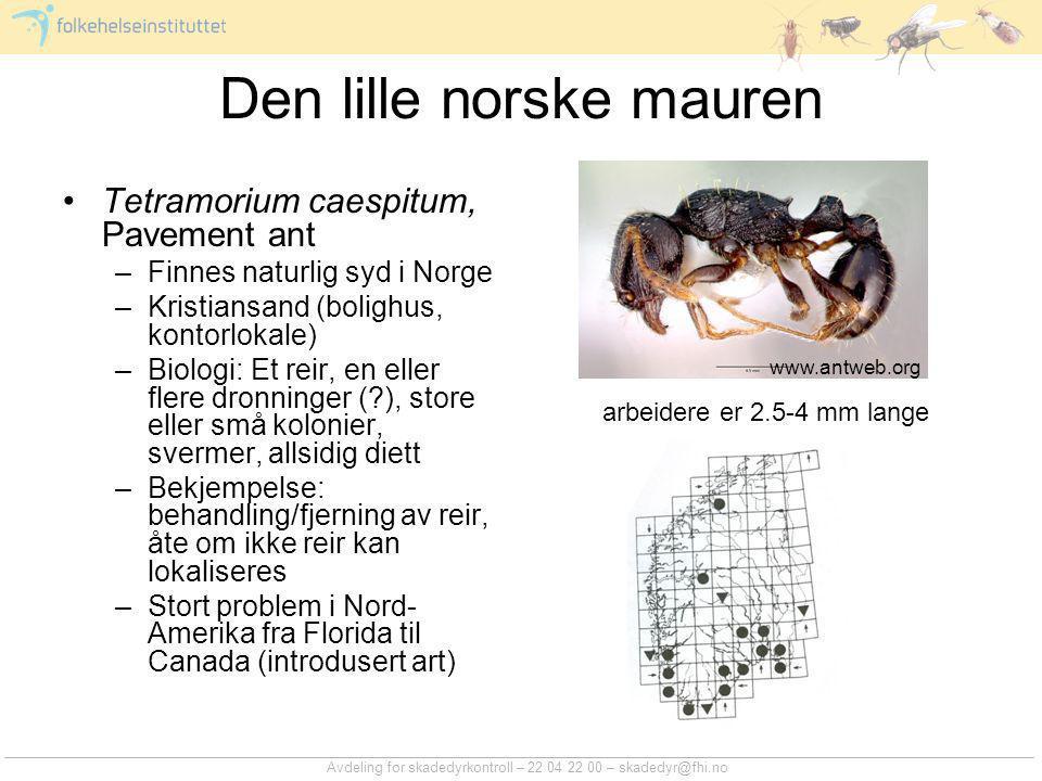 Avdeling for skadedyrkontroll – 22 04 22 00 – skadedyr@fhi.no Den lille norske mauren Tetramorium caespitum, Pavement ant –Finnes naturlig syd i Norge