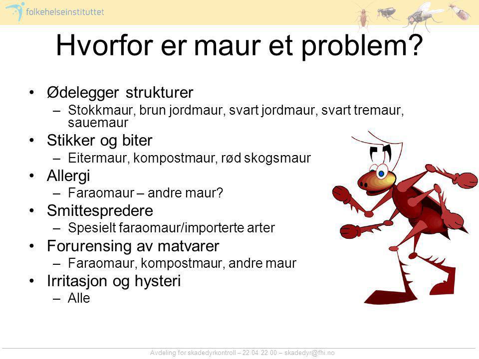 Avdeling for skadedyrkontroll – 22 04 22 00 – skadedyr@fhi.no Hvorfor er maur et problem? Ødelegger strukturer –Stokkmaur, brun jordmaur, svart jordma