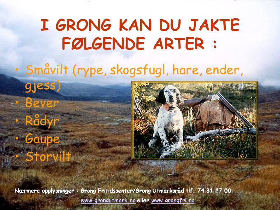 I GRONG KAN DU JAKTE FØLGENDE ARTER : Småvilt (rype, skogsfugl, hare, ender, gjess) Bever Rådyr Gaupe Storvilt Nærmere opplysninger : Grong Fritidssen