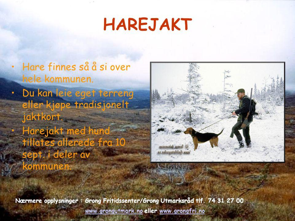 HAREJAKT Hare finnes så å si over hele kommunen. Du kan leie eget terreng eller kjøpe tradisjonelt jaktkort. Harejakt med hund tillates allerede fra 1
