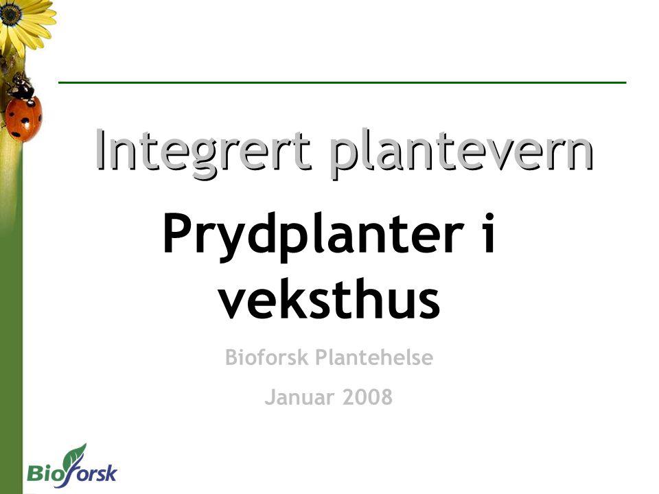 Integrert plantevern Prydplanter i veksthus Bioforsk Plantehelse Januar 2008