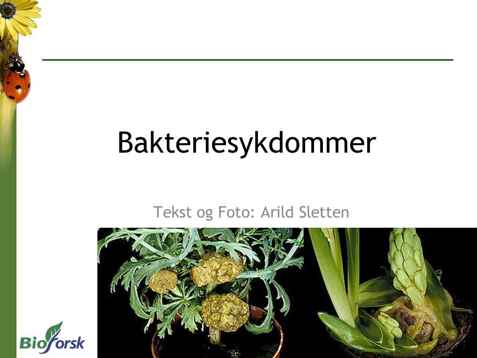 Tekst og Foto: Arild Sletten Bakteriesykdommer