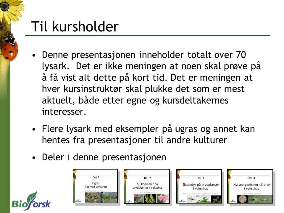 Tekst: Inger Sundheim Fløistad Del 1 Ugras i og ved veksthus med prydplanter Foto: I.S.