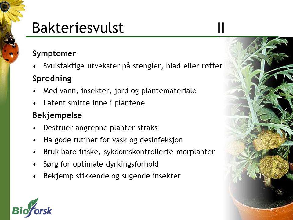 Bakteriesvulst II Symptomer Svulstaktige utvekster på stengler, blad eller røtter Spredning Med vann, insekter, jord og plantemateriale Latent smitte