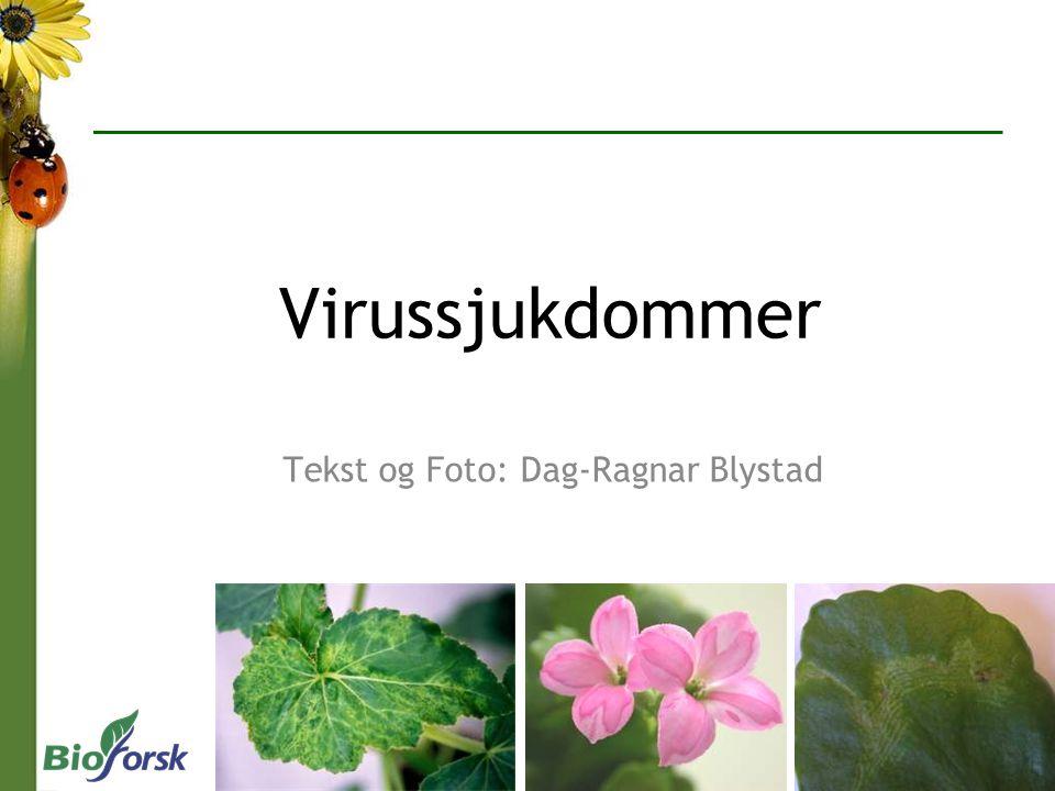 Virussjukdommer Tekst og Foto: Dag-Ragnar Blystad