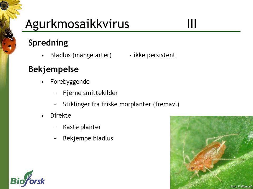 Agurkmosaikkvirus III Spredning Bladlus (mange arter)- ikke persistent Bekjempelse Forebyggende −Fjerne smittekilder −Stiklinger fra friske morplanter (fremavl) Direkte −Kaste planter −Bekjempe bladlus